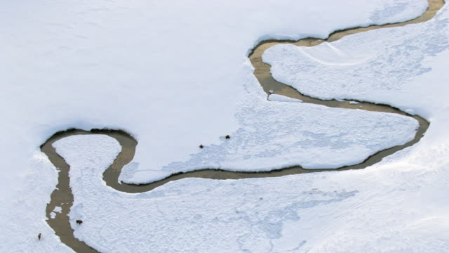 aerial track over bison (bison bison) grazing in snow by river, yellowstone, usa - yellowstone river stock videos and b-roll footage