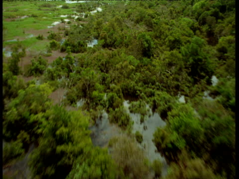 Aerial track over edge of flooded Amazon jungle and swamp.