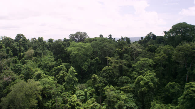 """aerial track over forest canopy, cambodia. - """"bbc natural history"""" stock videos & royalty-free footage"""