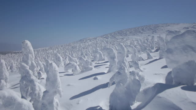 aerial track over forest of trees encased in snow and ice. - 凍った点の映像素材/bロール