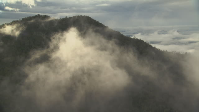 aerial track over forested hillside. - papua stock videos and b-roll footage