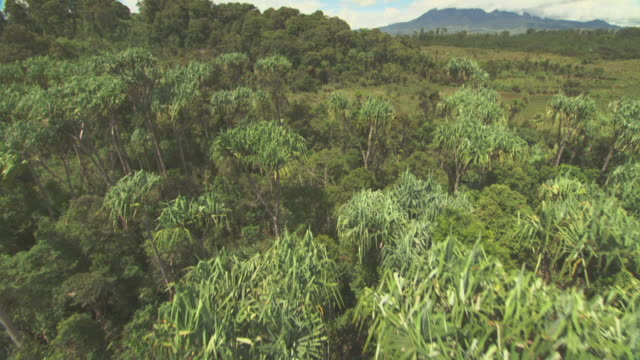 aerial track over grassland and trees. - papua stock videos and b-roll footage