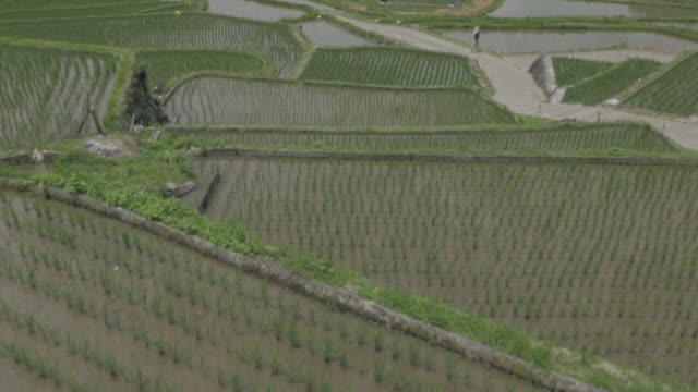 aerial track over paddy fields, japan. - takashima shiga stock videos & royalty-free footage