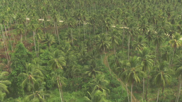 aerial track over palm tree plantation. - papua stock videos and b-roll footage