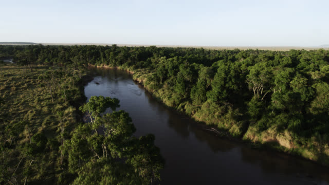 aerial track over river and woodland savannah, kenya - east africa stock videos & royalty-free footage