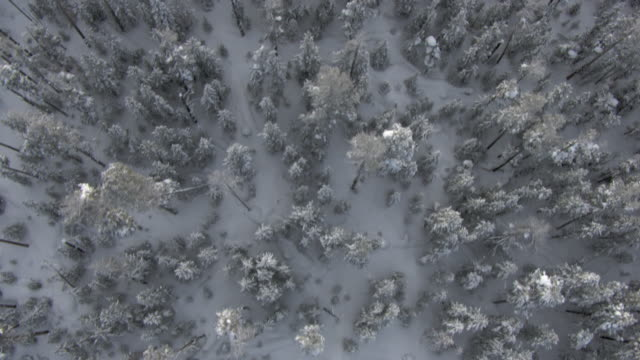 aerial track over snowy forest in winter, yellowstone, usa - yellowstone national park stock videos & royalty-free footage
