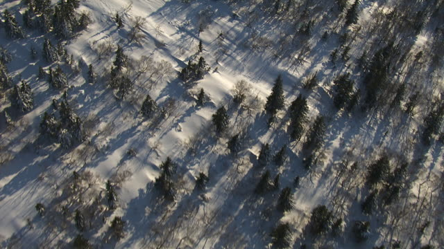 Aerial track over snowy forest. Japan.