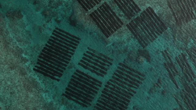 aerial track over underwater seaweed farms. japan. - 海草点の映像素材/bロール