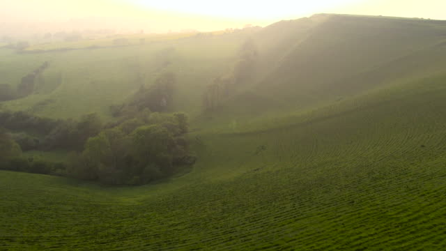 Aerial track over wild flower meadow and rolling hills, Dorset, England