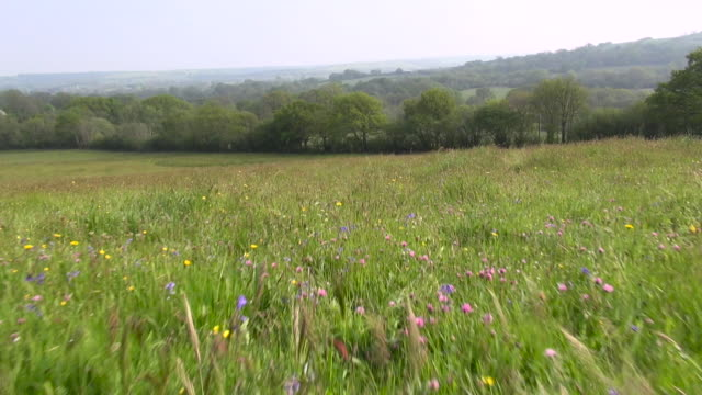Aerial track over wild flower meadow, Dorset, England