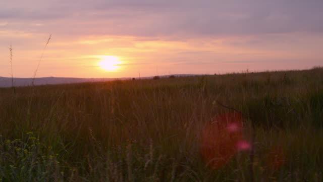 vídeos de stock, filmes e b-roll de aerial track past termite mounds at sunset. - savana