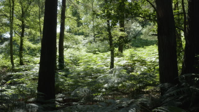 aerial track through woodland, sussex - woodland stock videos & royalty-free footage