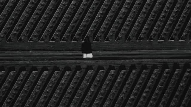 vídeos y material grabado en eventos de stock de aerial tracking shot showing a 4x4 driving through a volcanic vineyard, lanzarote, spain - majestuoso