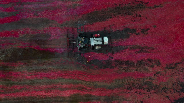 aerial tracking shot showing an unusual agricultural vehicle harvesting cranberries, massachusetts, united states of america - explorer stock videos & royalty-free footage