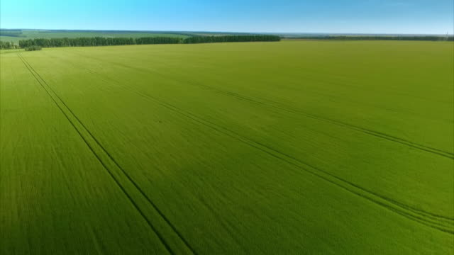 aerial tracking shots showing large green fields in russia's central federal district. - land stock videos & royalty-free footage