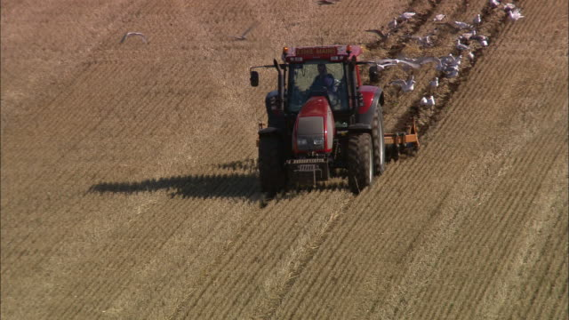 aerial tractor with combine attached plowing field w/ seagulls in its wake / aberdeenshire, scotland - gabbiano video stock e b–roll