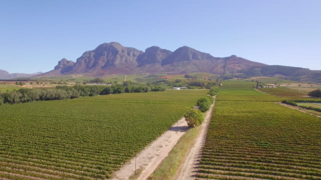 Aerial travel drone view of a dirt road and grape vineyard farms in South Africa.