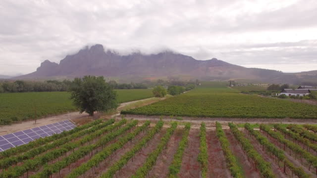 Aerial travel drone view of solar panels and grape vineyard farms in South Africa.