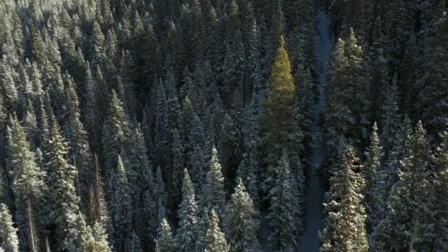 aerial, treetops in woodland landscape - plant attribute stock videos and b-roll footage