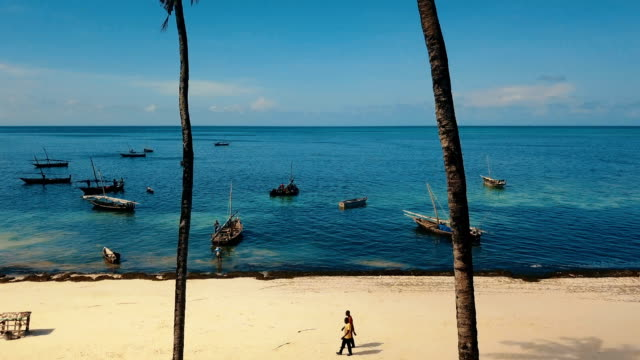 vídeos y material grabado en eventos de stock de aerial/ tropical ocean revaling behind coconut trees - tanzania