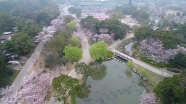 aerial turtle head isle in taihu lake in wuxi city scenic spot of the cherry blossom valley - laubbaum stock-videos und b-roll-filmmaterial