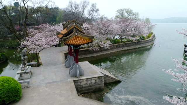 vídeos de stock e filmes b-roll de aerial turtle head isle in taihu lake in wuxi city scenic spot of cherry blossoms - árvore de folha caduca
