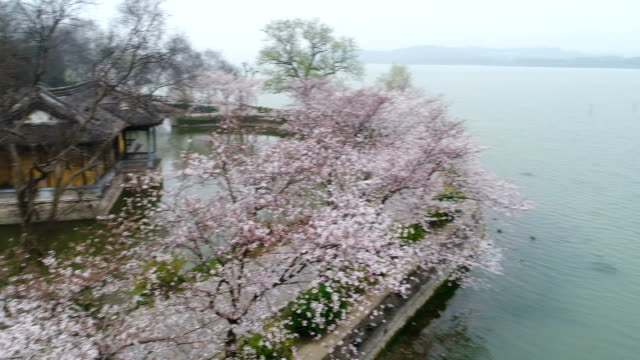 aerial turtle head isle in taihu lake in wuxi city scenic spot of cherry blossoms - wuxi stock videos and b-roll footage