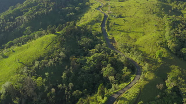 vídeos de stock e filmes b-roll de aerial: twisting road among lush green - árvore tropical