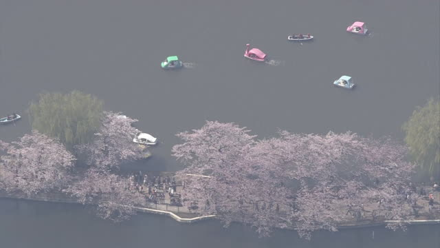 aerial, ueno park in spring, tokyo, japan - shinobazu pond stock videos and b-roll footage