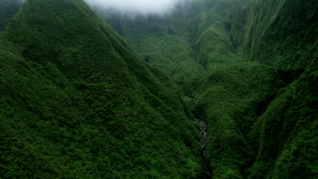 aerial valley view maui vegetation in tropical rainforest - hawaii inselgruppe stock-videos und b-roll-filmmaterial
