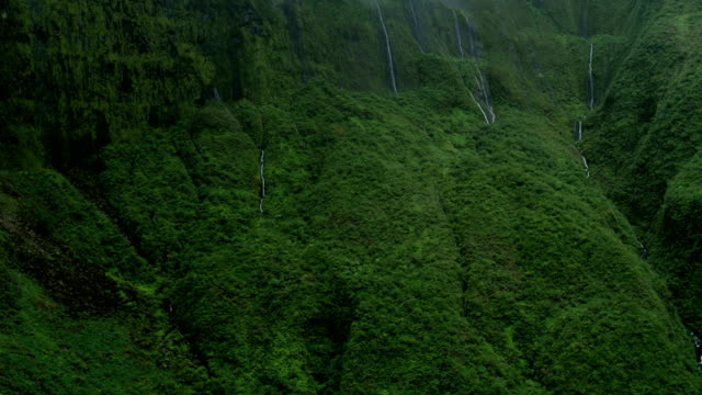 aerial valley view maui waterfall tropical rainforest usa - hawaii inselgruppe stock-videos und b-roll-filmmaterial