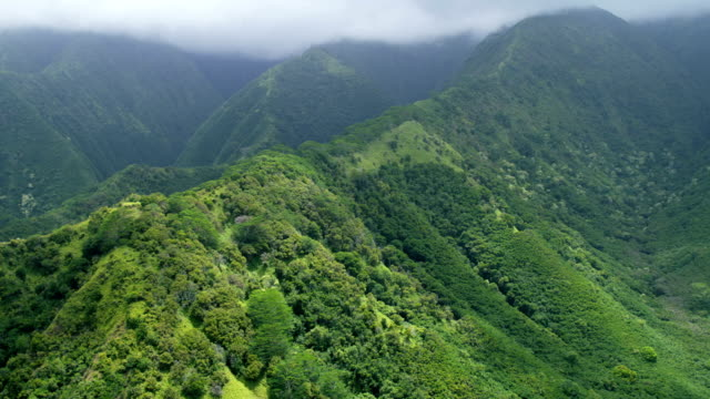 aerial valley view tropical rainforest and foliage maui - hawaii inselgruppe stock-videos und b-roll-filmmaterial