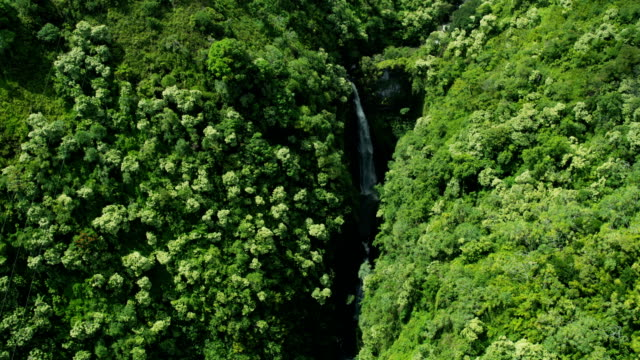 aerial valley view tropical waterfalls on maui hawaii - hawaii inselgruppe stock-videos und b-roll-filmmaterial
