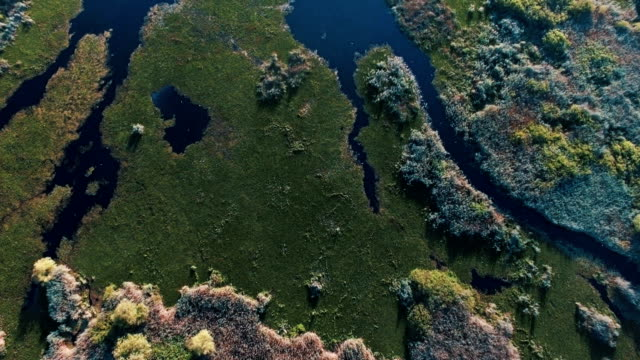 Aerial vertical/ The Danube Delta canals