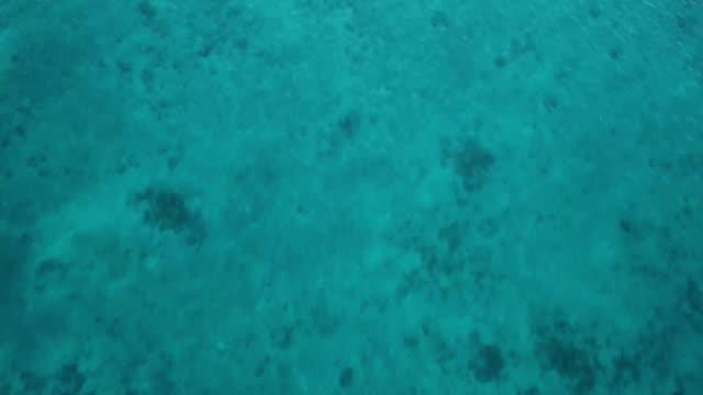 aerial vertical/ the ocean, coral reef - seabed stock videos & royalty-free footage