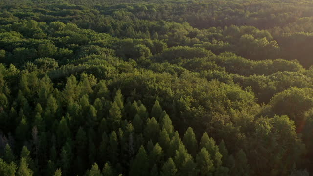 aerial video above green forest - drone footage - pine stock videos & royalty-free footage