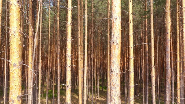 vidéos et rushes de aerial video above green forest - drone footage - pin