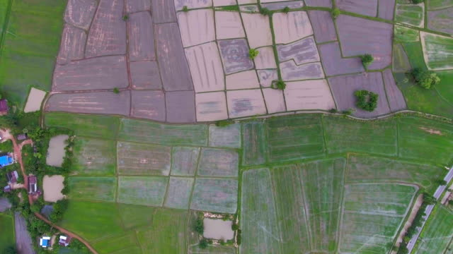 Aerial video above rice terraces in a beautiful day, top view