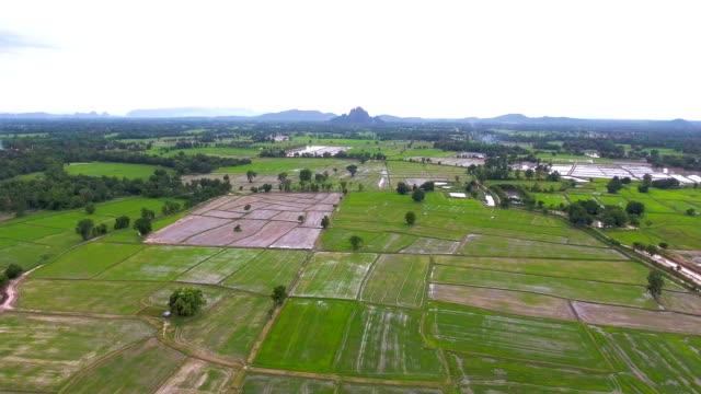 vídeos y material grabado en eventos de stock de video aéreo encima de terrazas de arroz en un hermoso día - rice paddy