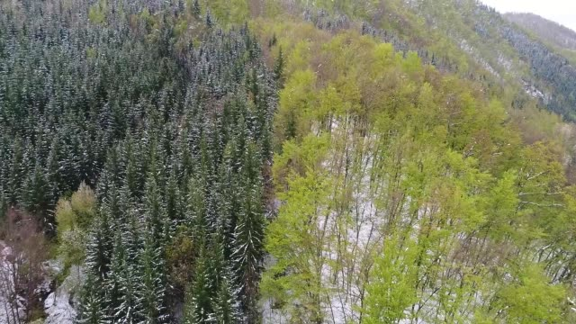 aerial video clip of snow forest - bosnia and hercegovina stock videos & royalty-free footage