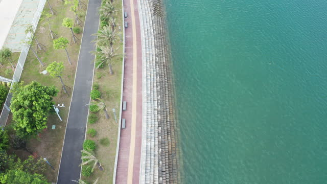 aerial video directly above the coastline - fan palm tree stock videos & royalty-free footage