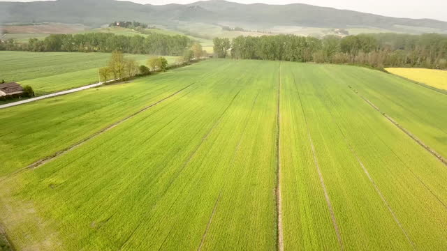 vidéos et rushes de aerial video flying over the green and yellow rapeseed fields in siena, tuscany, italy at daytime - végétation verdoyante