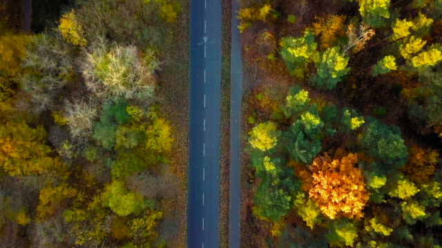 aerial video following a road through colorful indian summer forest - road marking stock videos & royalty-free footage