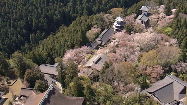 aerial video footage taken on april 5 by a drone hovering over yoshino nara prefecture shows scenic mount yoshinoyama turned into a tapestry of pinks... - nara prefecture stock videos and b-roll footage