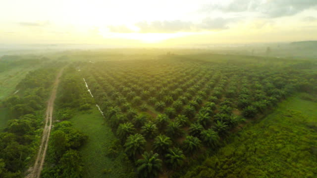 aerial video of agriculture field - rubber stock videos & royalty-free footage