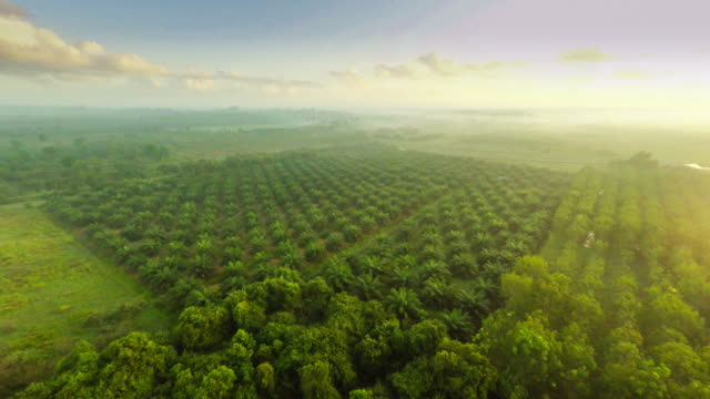 aerial video of agriculture field - rubber tree stock videos & royalty-free footage