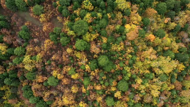 aerial video of forest in autumn - drone footage - カバノキ点の映像素材/bロール