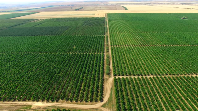 Aerial video of plantations with orchards