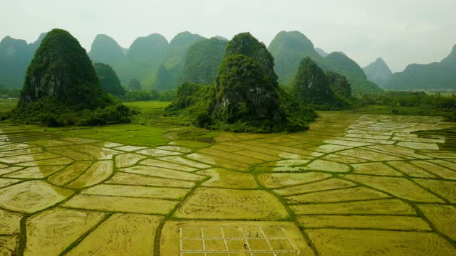 aerial video of rice fields of the karst mountains of guilin, china - dramatic landscape stock videos & royalty-free footage