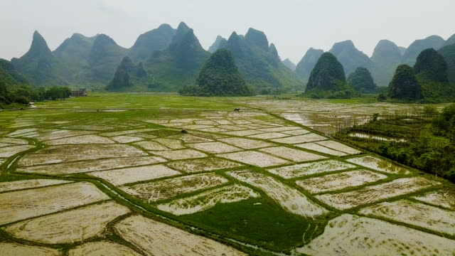 aerial video reisfelder der karstberge von guilin, china - reis grundnahrungsmittel stock-videos und b-roll-filmmaterial